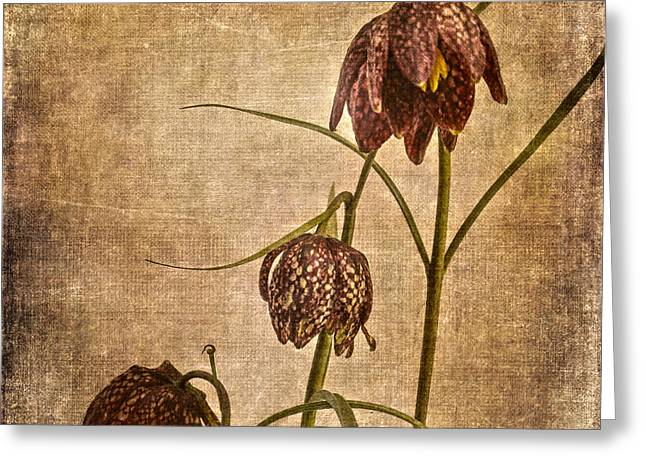 Fritillaria Meleagris Greeting Card by Patricia Hofmeester