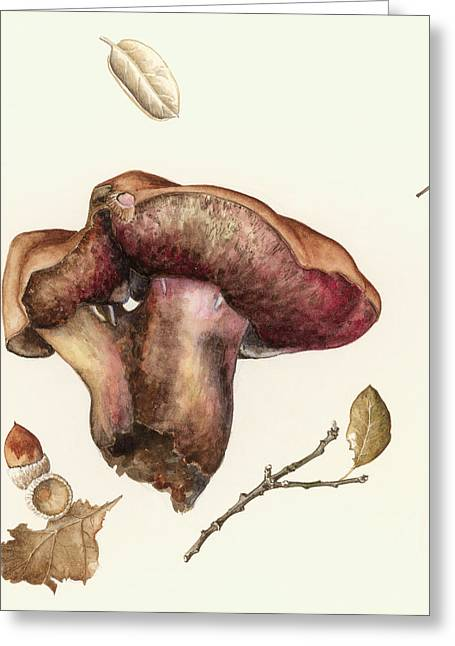 Fungus Greeting Card by Alison Cooper