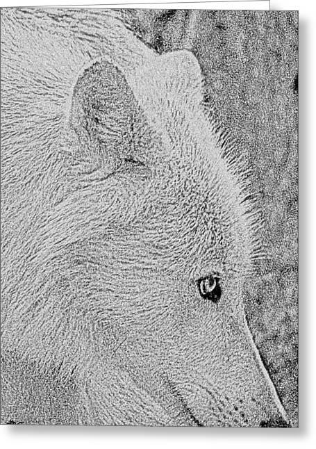 Gentle Arctic Wolf  Greeting Card