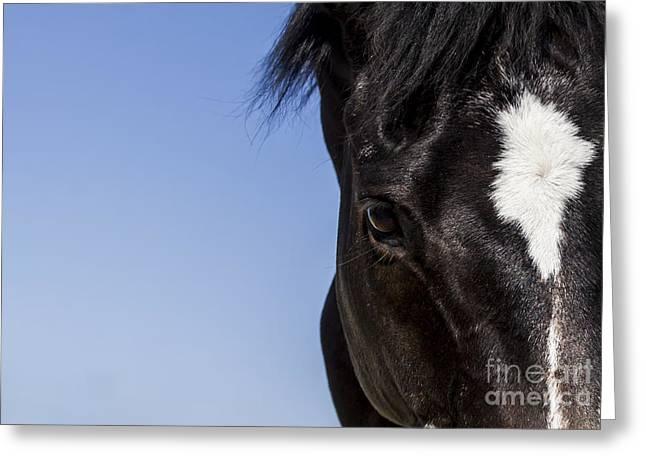 Horse - Dark Bay II Greeting Card by Holly Martin