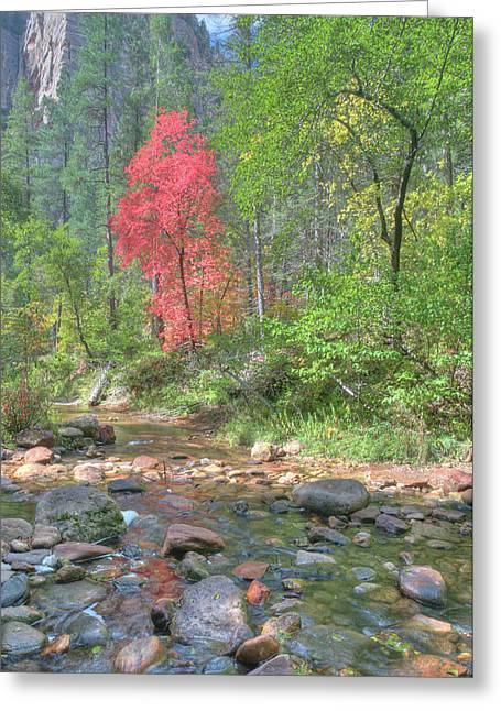 Lone Maple Fall Creek Greeting Card