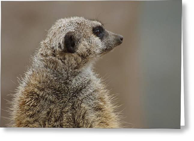 Meerkat Greeting Card by Ernie Echols