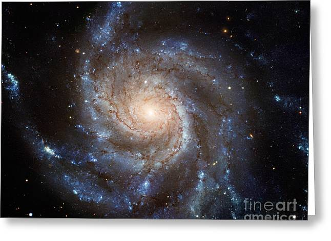 Messier 101 Greeting Card by Barbara McMahon