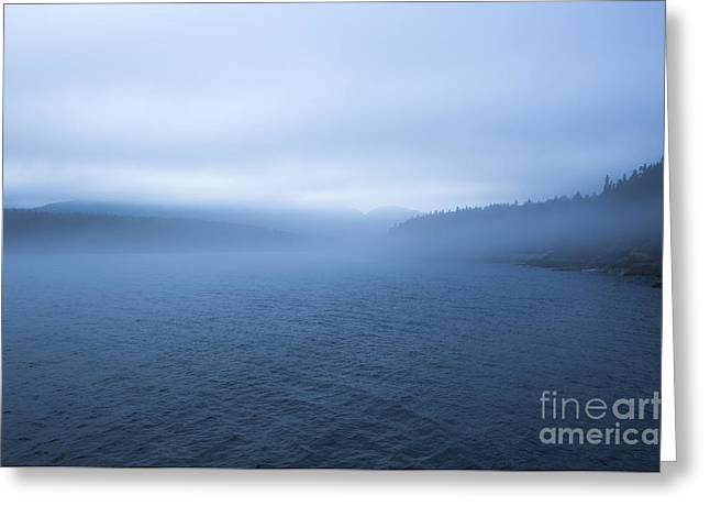 Mist In Otter Cove Greeting Card by Diane Diederich