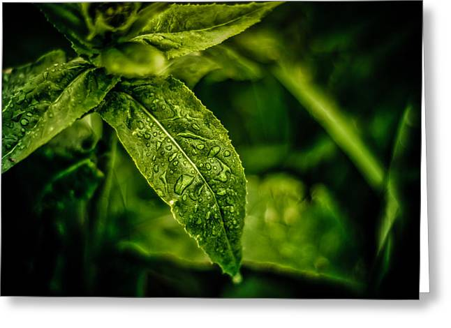 Greeting Card featuring the photograph  Morning Dew by Jason Naudi Photography