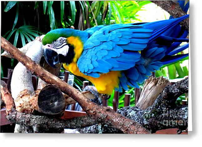 Parrot Greeting Card Greeting Card