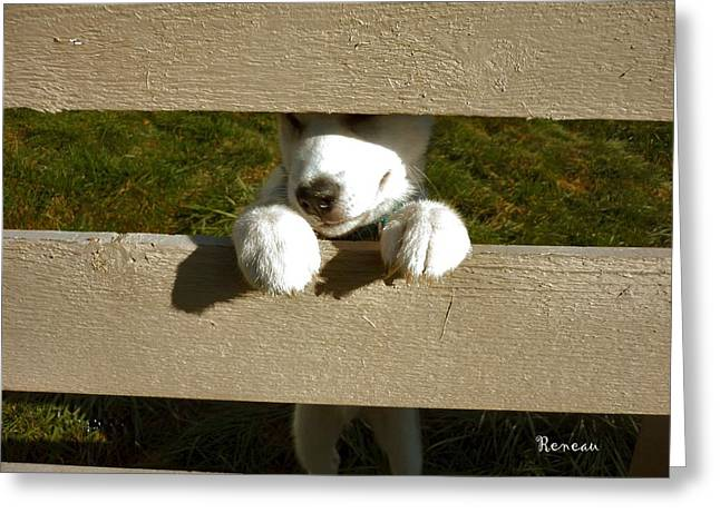 Pooch Prisoner Greeting Card by Sadie Reneau