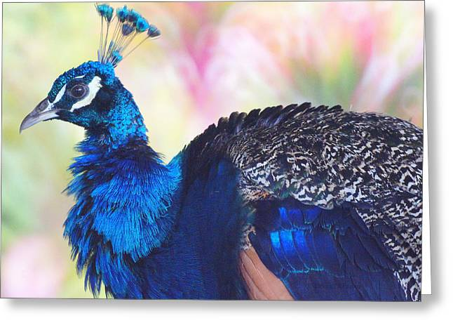 Prime Peacock Greeting Card by DerekTXFactor Creative