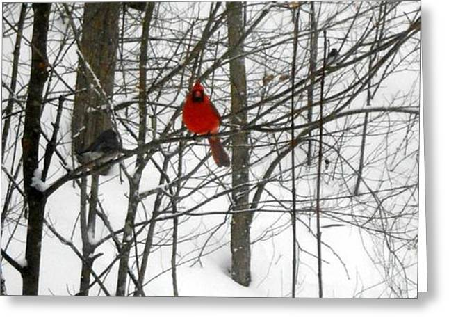 Red Wings In The Woodland Greeting Card by Dina  Stillwell