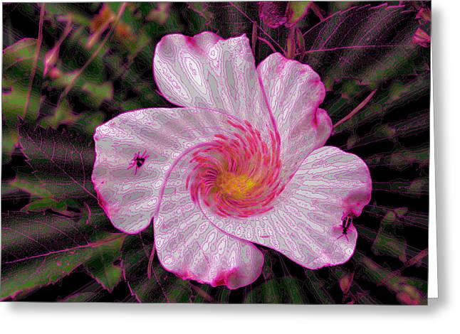 Rippling Pink Greeting Card by Yolanda Raker