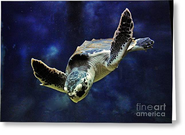 Greeting Card featuring the photograph  Sea Turtle by Savannah Gibbs