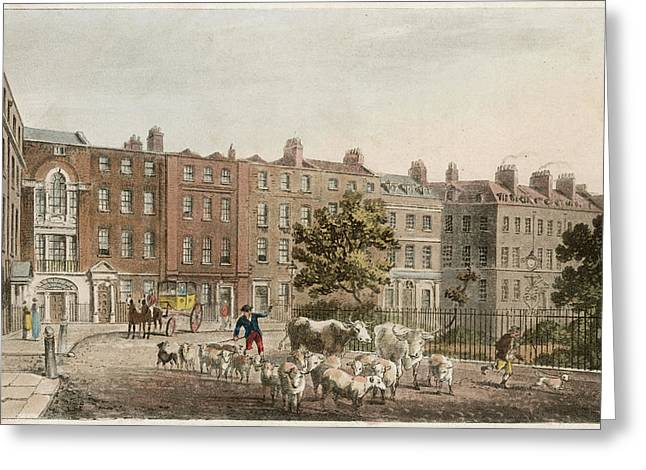 Soho Square, With Cattle         Date Greeting Card by Mary Evans Picture Library