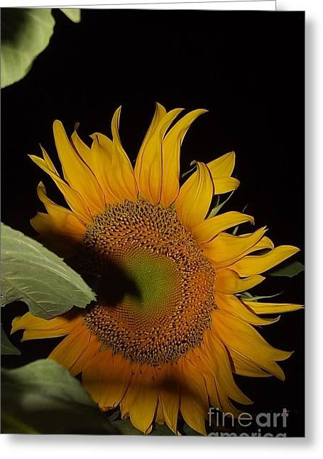 Greeting Card featuring the photograph  Sunflower Shines In The Night by Diane Miller