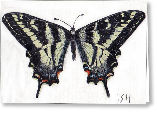 Swallowtail Butterfly  Greeting Card by Inger Hutton