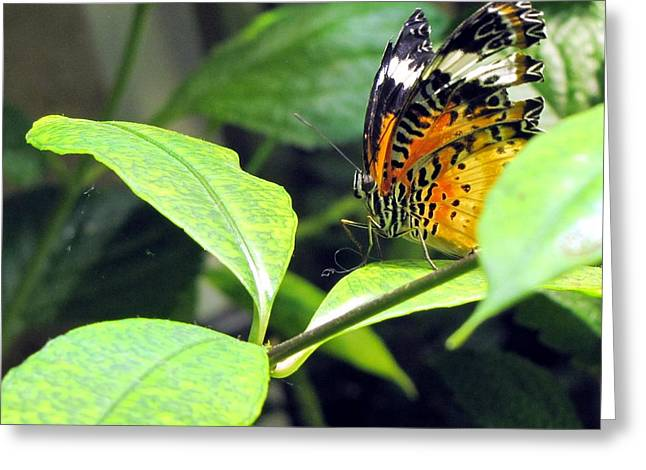 Tiger Wings Greeting Card
