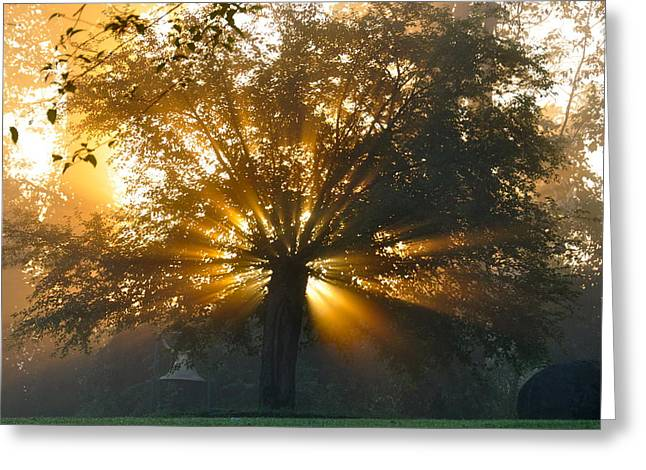 Tree Burst Greeting Card by David Flitman