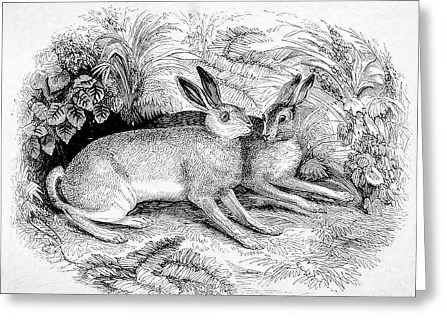 Two Hares Greeting Card
