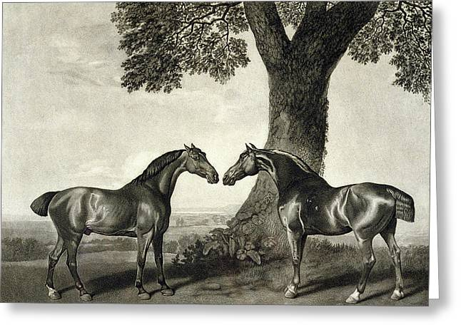 Two Hunters  Greeting Card by GT Stubbs