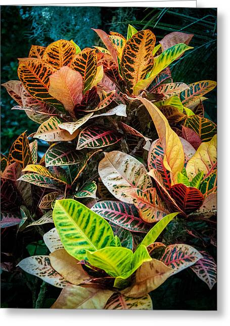 Variegated Plants Greeting Card