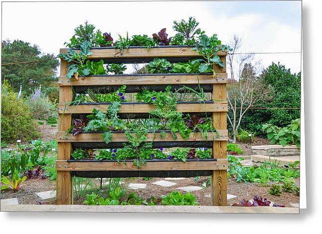 Vegetable Garden 1 Greeting Card by Lanjee Chee