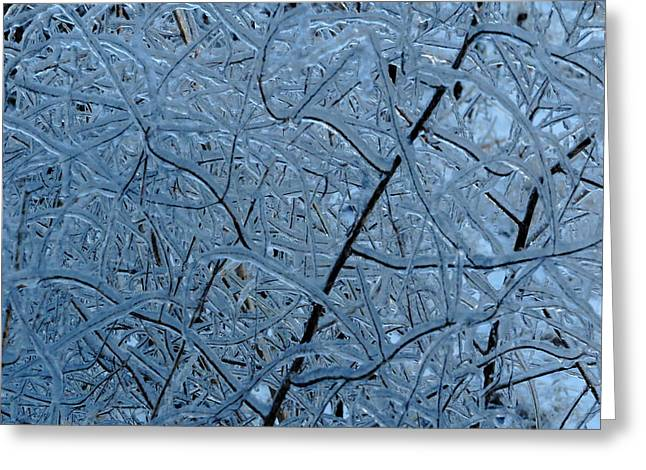 Vegetation After Ice Storm  Greeting Card