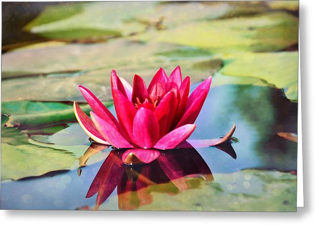 Water Lily Greeting Card by Gynt