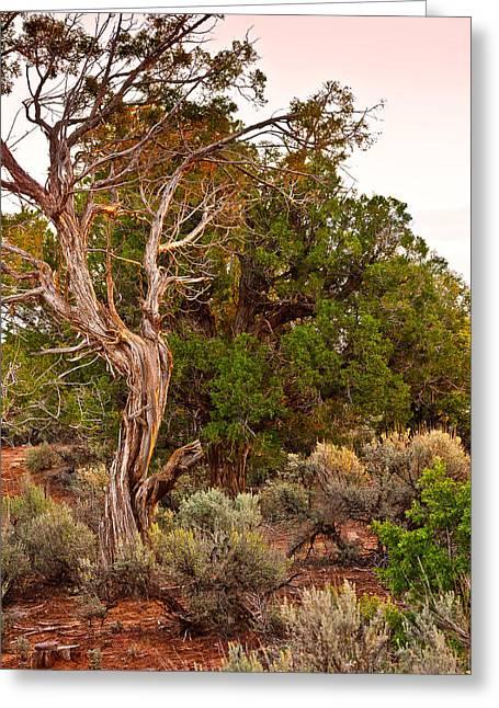 Weathered Tree Sunrise Canyon Dechelly Greeting Card by Bob and Nadine Johnston