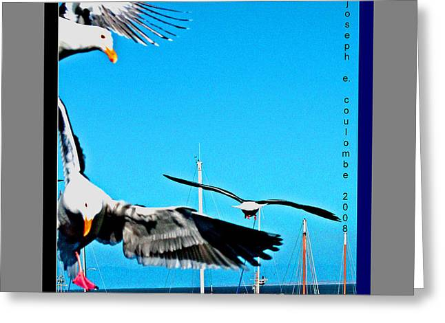 West Coast Sea Birds Greeting Card