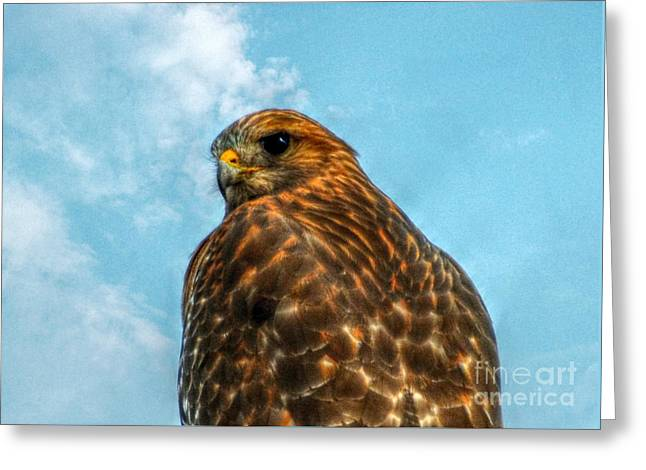 What Are You Looking At Red Shoulder Hawk Greeting Card