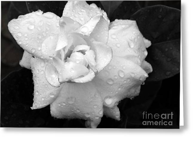 White Drops Greeting Card by Michelle Meenawong