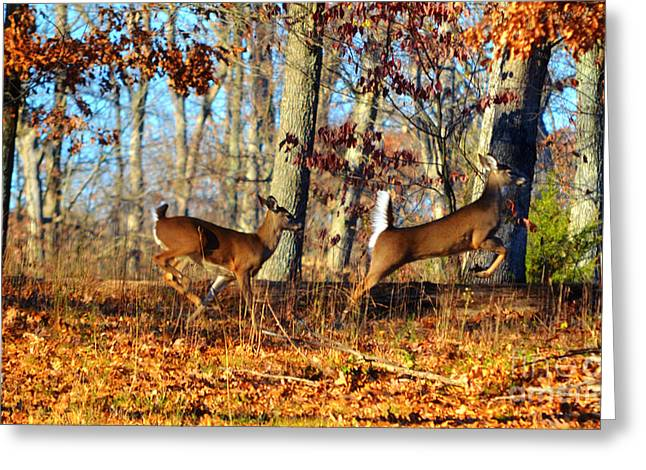 White Tail Deer Leaping  Greeting Card by Peggy Franz