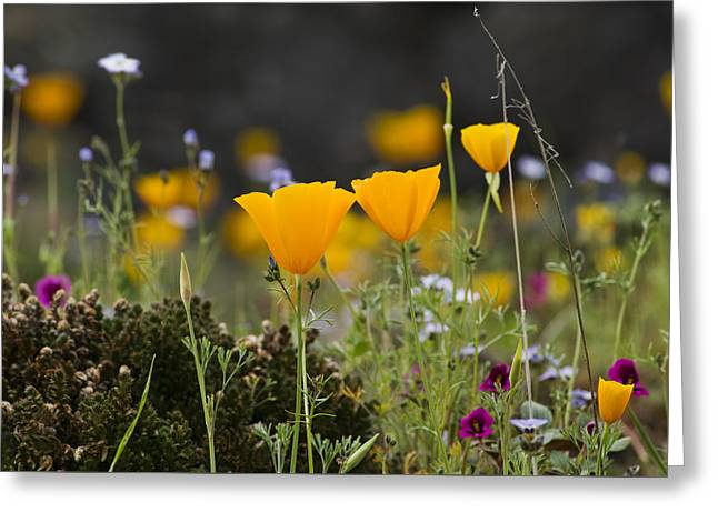 Wildflowers Explode Greeting Card