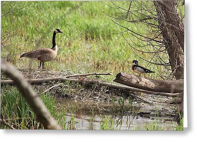 Wildlife Scenery Greeting Card