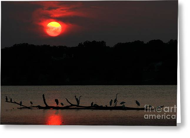 0016 White Rock Lake Dallas Texas Greeting Card