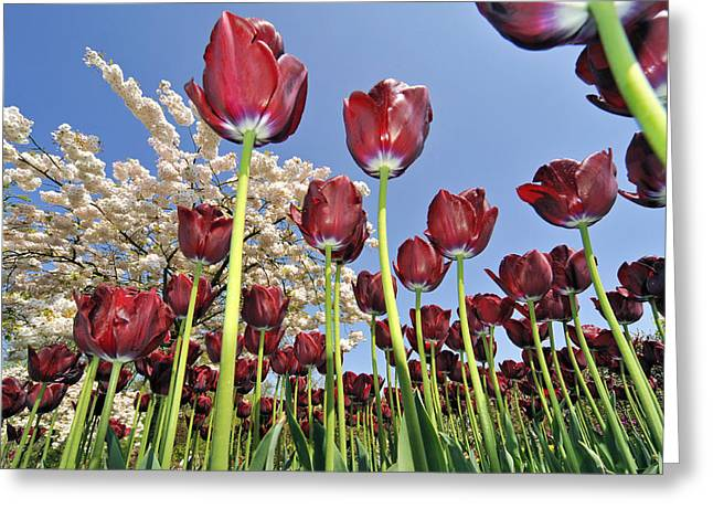 Greeting Card featuring the photograph 090416p029 by Arterra Picture Library