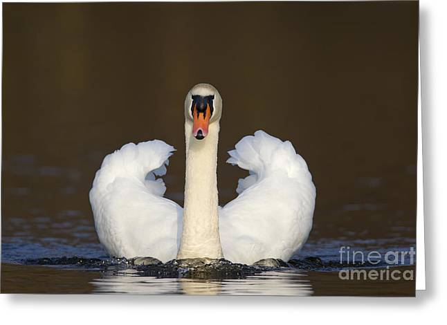 121012p165 Greeting Card by Arterra Picture Library