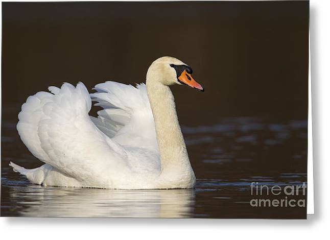 121012p168 Greeting Card by Arterra Picture Library