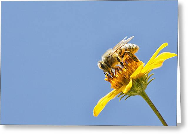 A Bee Is Busy Pollenating Flowers Greeting Card by Robert Postma