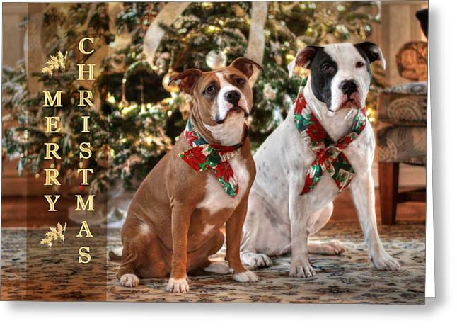 A Bubba And Kensie Christmas Greeting Card by Shelley Neff