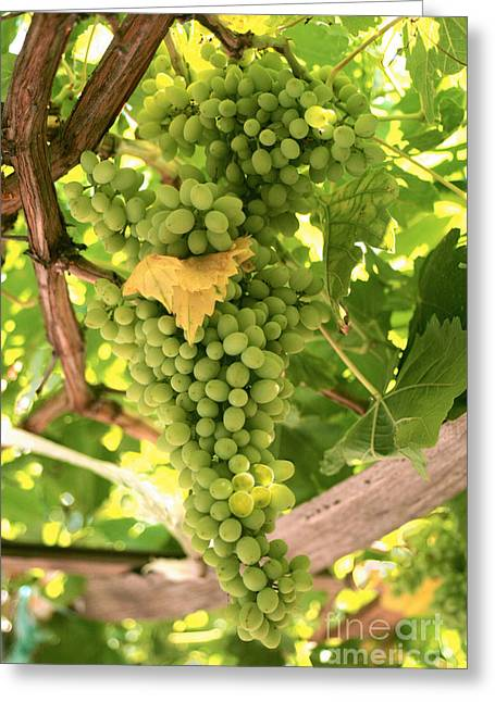 A Bunch Of White Grapes  Greeting Card