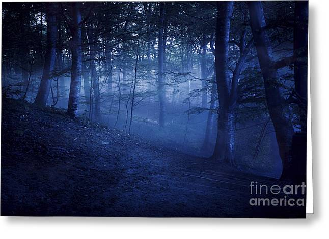 A Dark, Misty Forest, Liselund Greeting Card