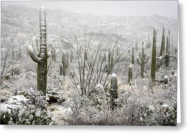 A Desert Snow Day  Greeting Card