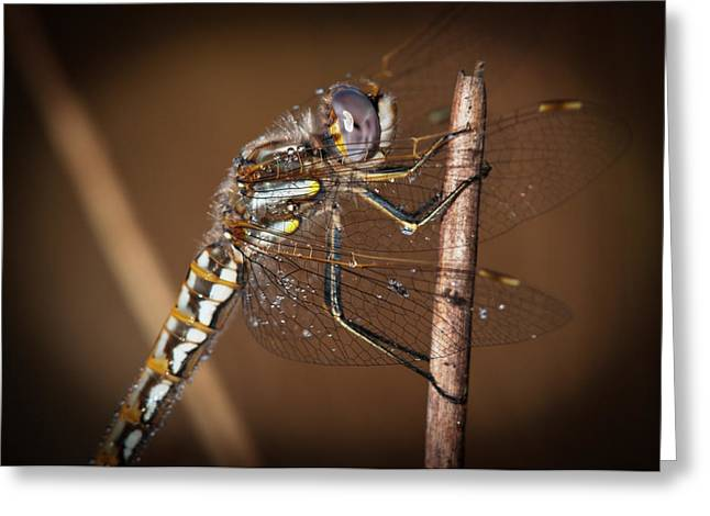 A Dragonfly Watches For Prey  Astoria Greeting Card by Robert L. Potts