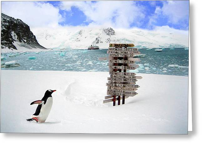 A Gentoo Penguin (pygoscelis Papua Greeting Card by Miva Stock