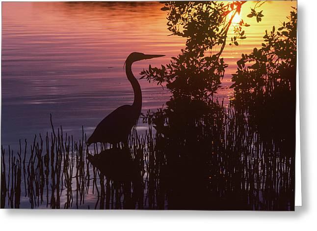 A Great Blue Heron  Ardea Herodias Greeting Card by Robert L. Potts