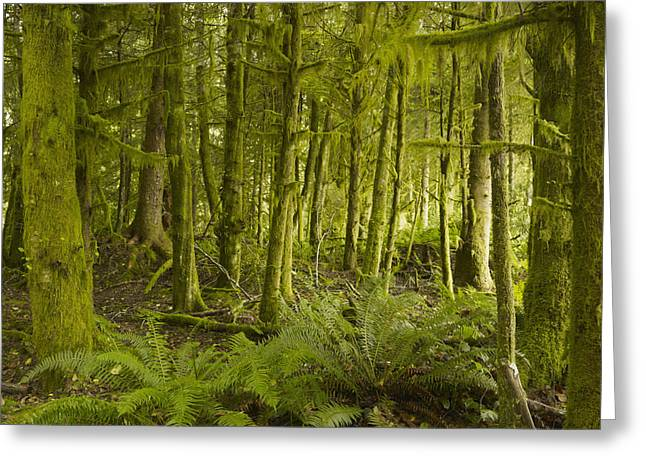 A Lush Forest Tofino British Columbia Greeting Card by Ian Grant