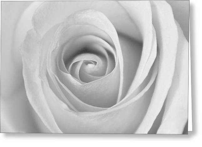 Greeting Card featuring the photograph A Rose Is A Rose Is... by Silke Brubaker