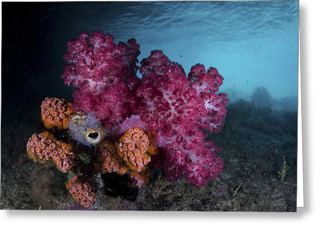 A Soft Coral Colony And Invertebrates Greeting Card by Ethan Daniels