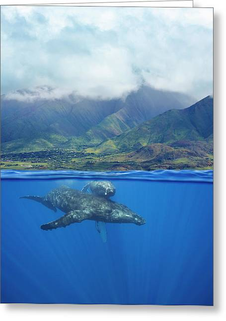 A Split Image Of A Pair Of Humpback Greeting Card
