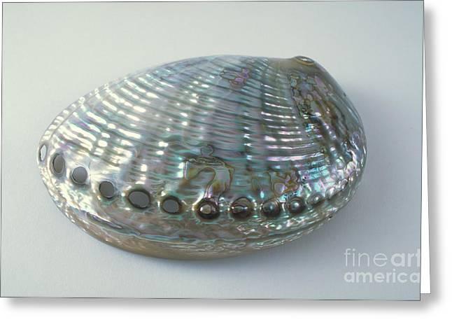 Abalone Shell Greeting Card by Barbara Strnadova